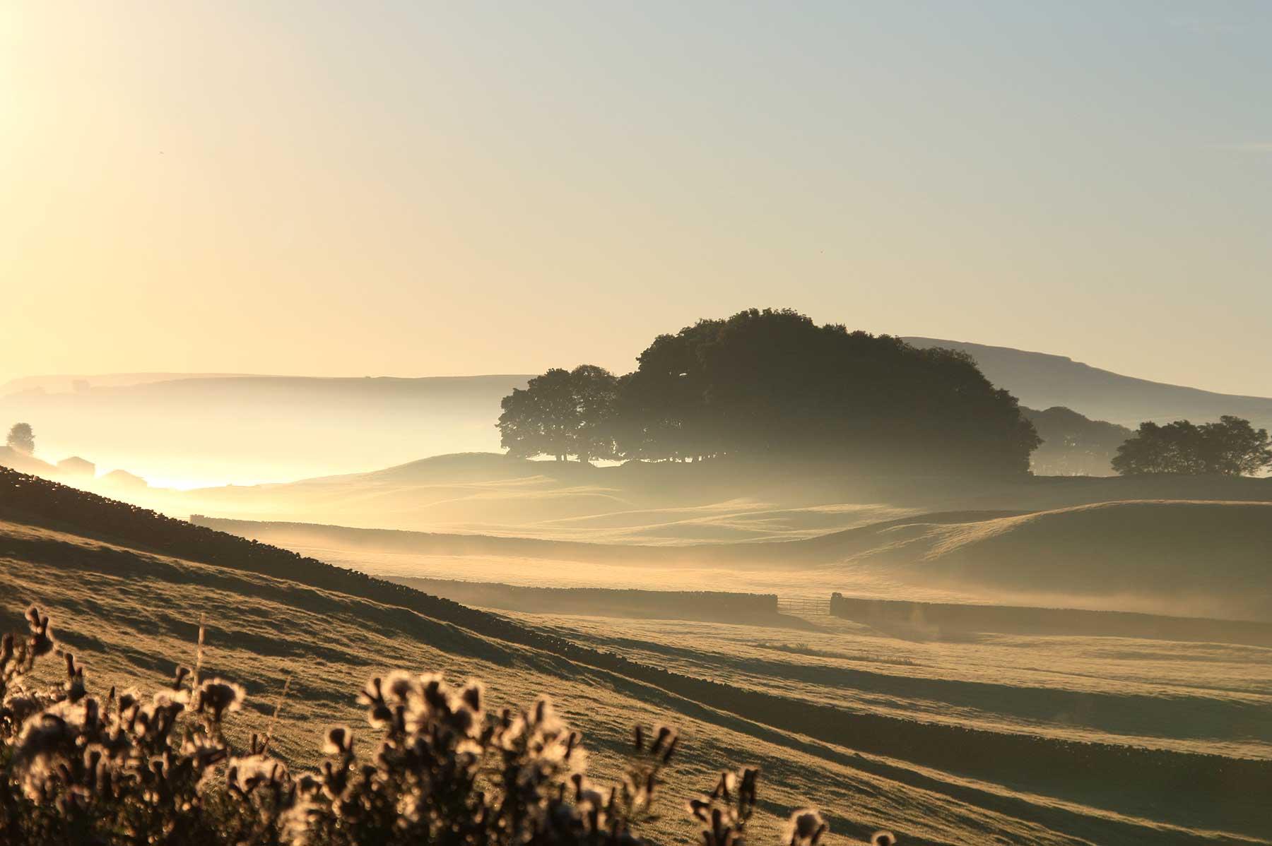 Wensleydale Mist